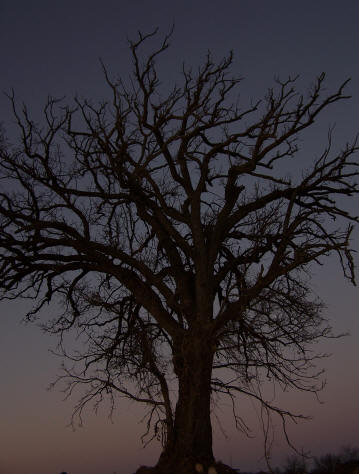 Halloween tree picture taken during a ghost hunt