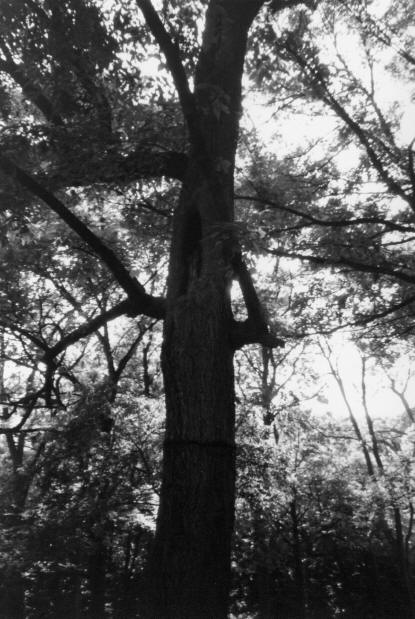 Bachelor's Grove spooky tree during ghost hunt